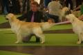 Bryan auf der Welthundeausstellung in Paris 2011