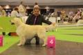 Thyler auf der Welthundeausstellung in Paris 2011