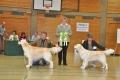 Bryan wird Best of Breed in Hoechstadt