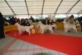 Bryan wird zweiter auf der World Club Dog Show of Retrievers in Bratislava