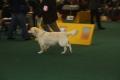 Thyler auf der World Dog Show 2009 in Bratislava